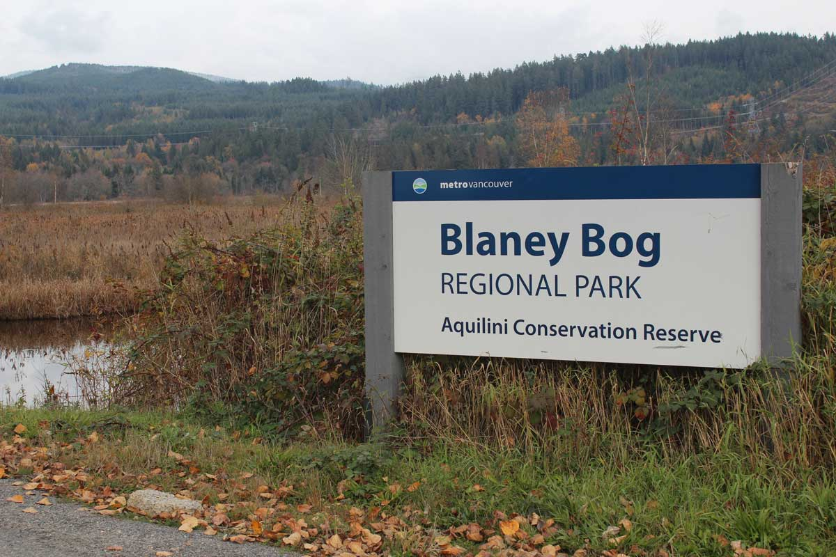 Image of Aquilini Conservation Reserve - Blaney Bog